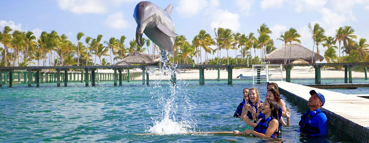 Dolphin Explorer Punta Cana - Swim with dolphins