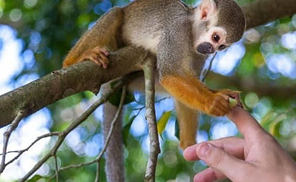 MonkeyLand Punta Cana Excursion